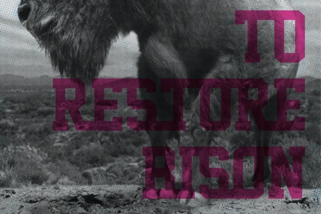 David Bernie Restore the Bison Indian Country 52 Week 40