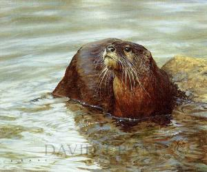 Nature – Wildlife Oil Painting of an Otter