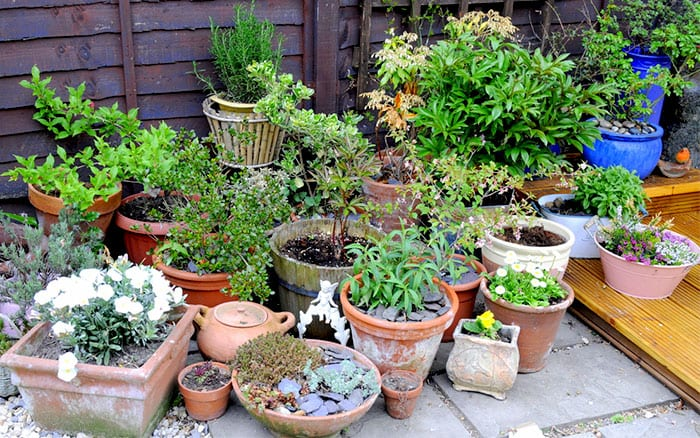 A Quick Guide To Garden Pots Planters And Containers