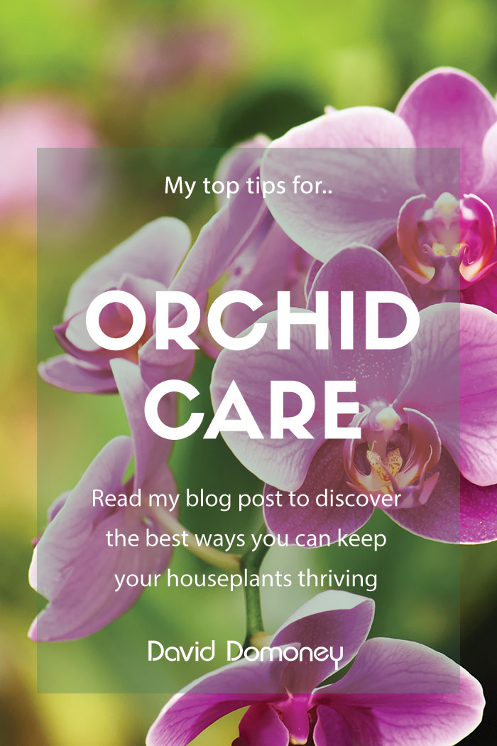 How To Care For Orchids And Keep Houseplants Alive