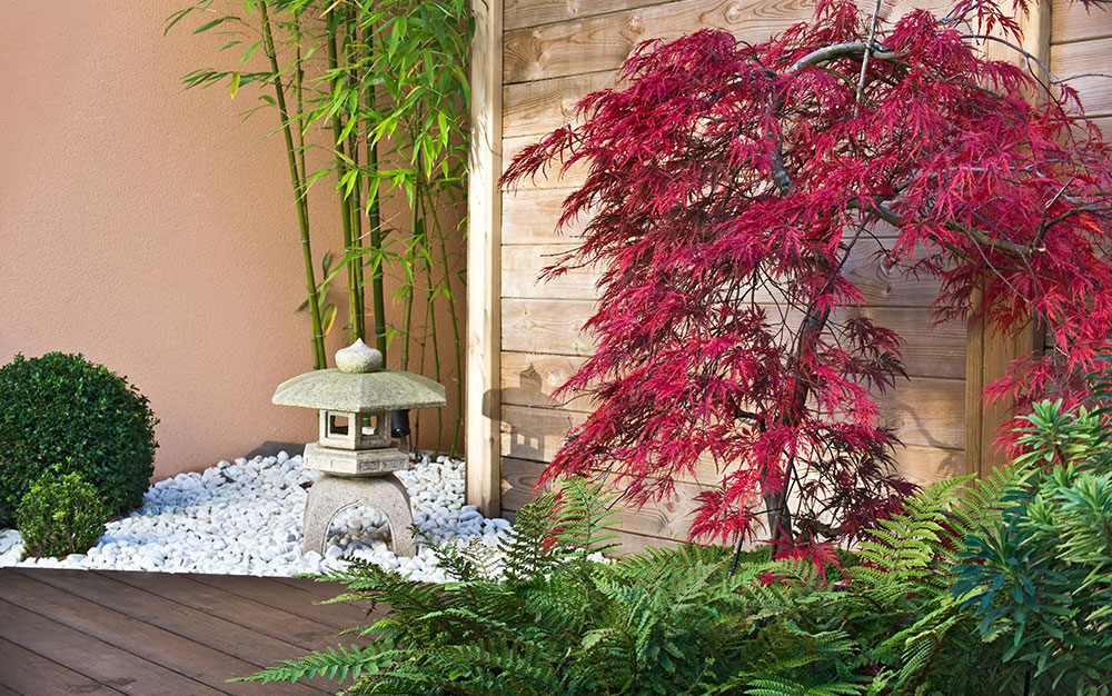 15 Best Trees For Small Gardens Beautiful Small Trees