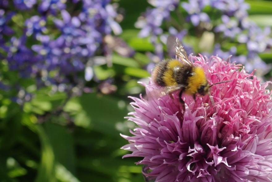 The bees are having a busy time of it, collecting pollen from the garden. Have a great weekend everyone!