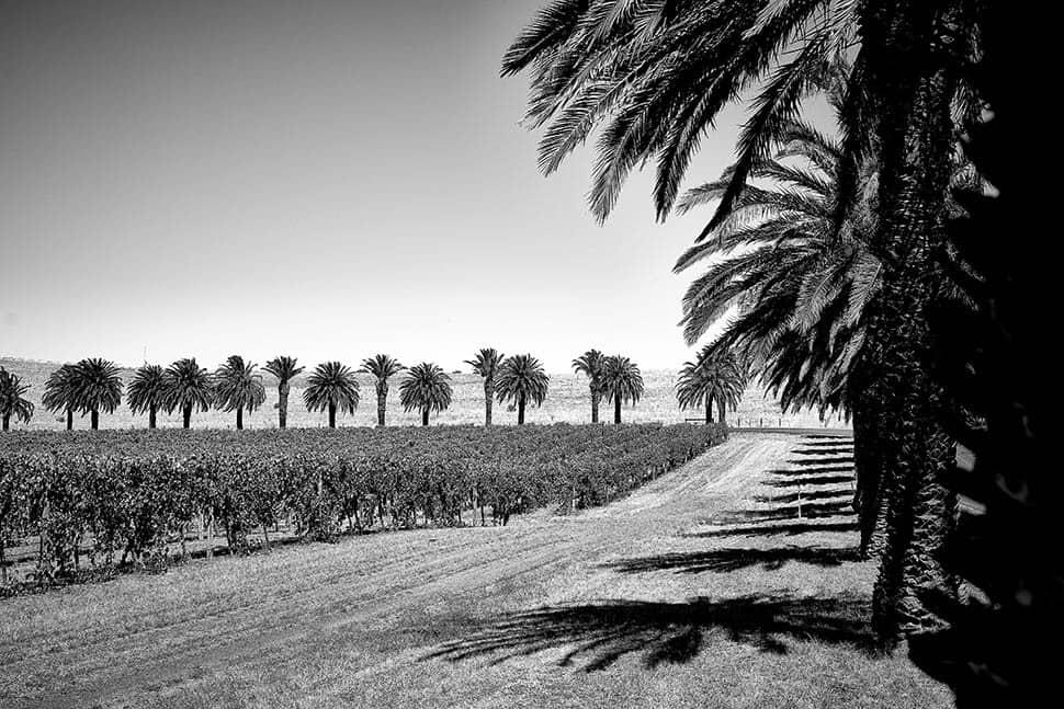 FINO Seppeltsfield Estate - Palm Trees