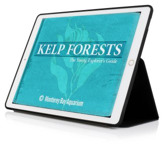 kelp-forests-cover