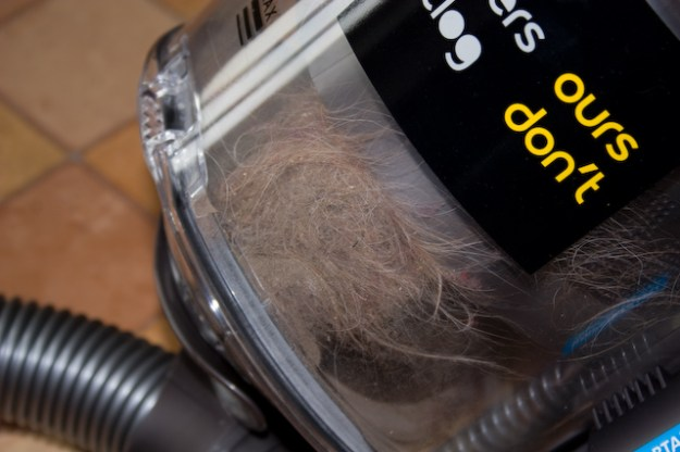 Dog hair in the vacuum cylinder