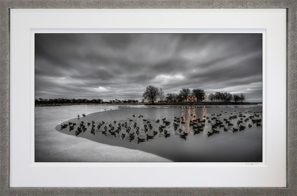 Framed Ice Ducks