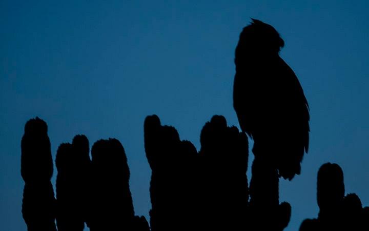 Hand Holding Twilight Owls