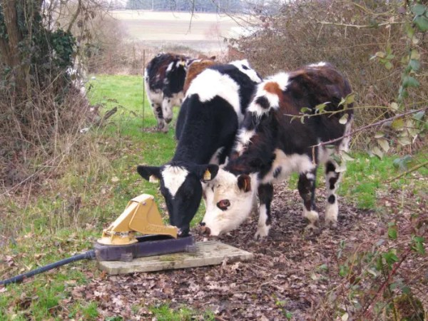 AQUAMAT 2 PASTURE PUMP-0
