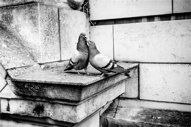 Londýn – love of pingeons [David Surý]