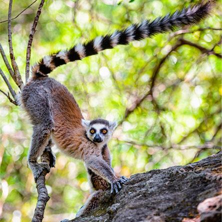 Madagaskar – lemur catta [David Surý]