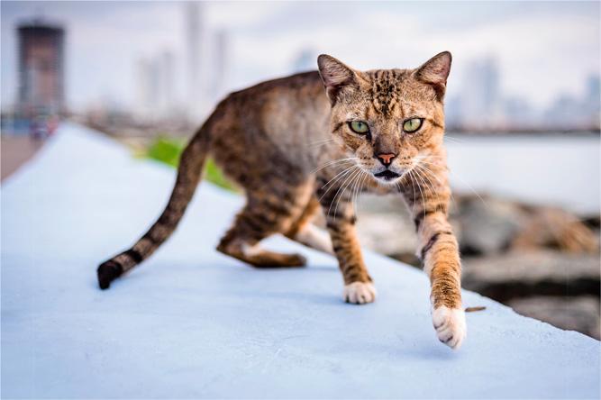 Panama cat [David Surý]