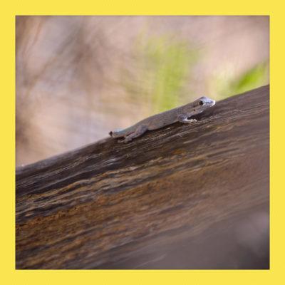 Madagascar_NikonD600_1007_20161015_polaroid