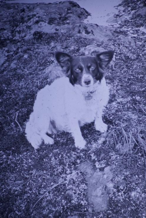 "Attu, Alaska - My dog ""Fluffy"""