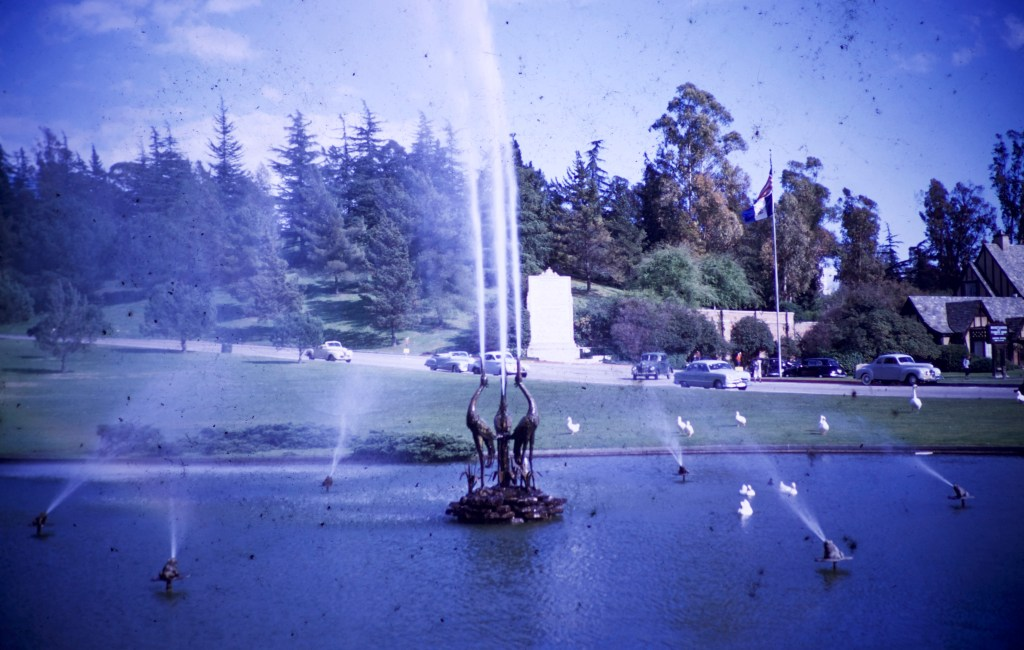 Forest Lawn – Duck Pool