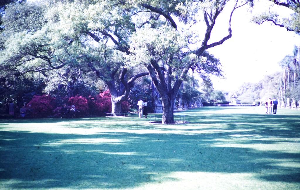 Huntington Library and Art Gallery – Azalea Garden