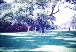 Huntington Library and Art Gallery - Azalea Garden