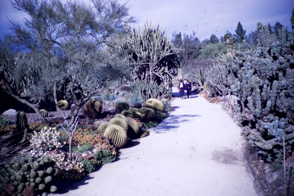 Huntington Library and Art Gallery - Cacti Garden