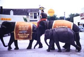 Hutchinson, Minnesota - Circus Elephants