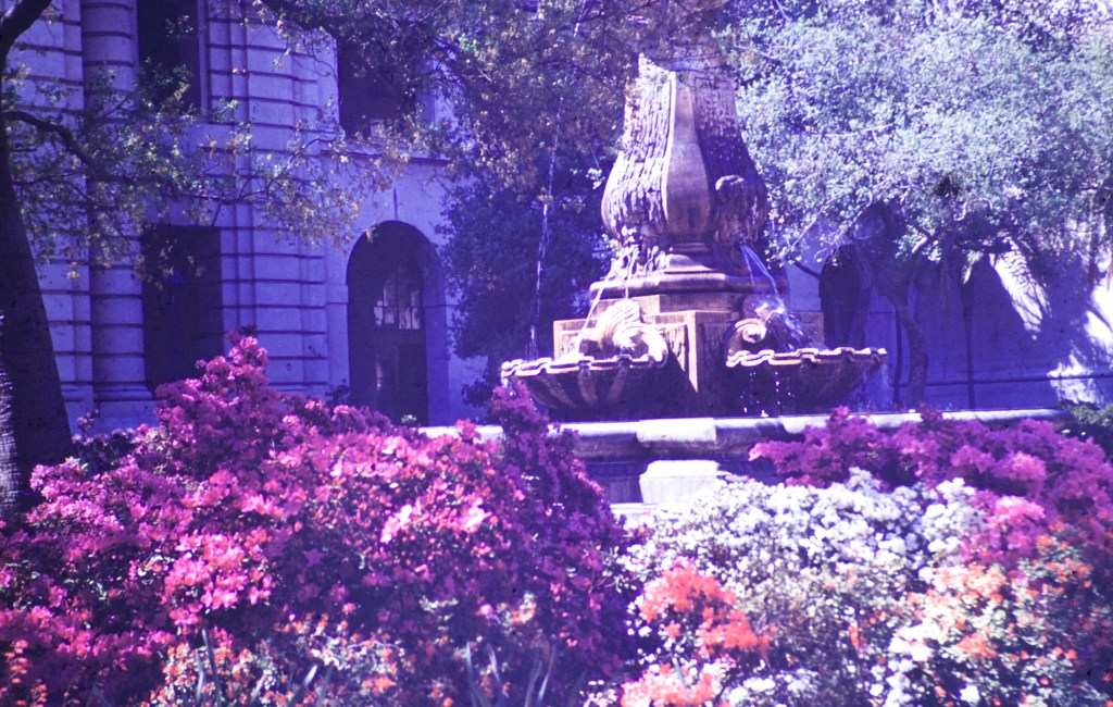 Pasadena City Hall – Garden