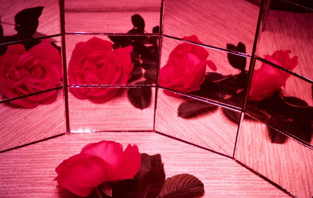 Still Life – A Rose – A Rose – A Rose