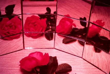 Still Life - A Rose - A Rose - A Rose