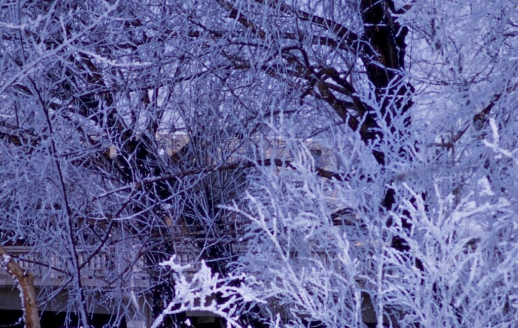 Winter – Frosty