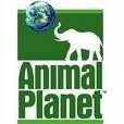 Animalplanet201