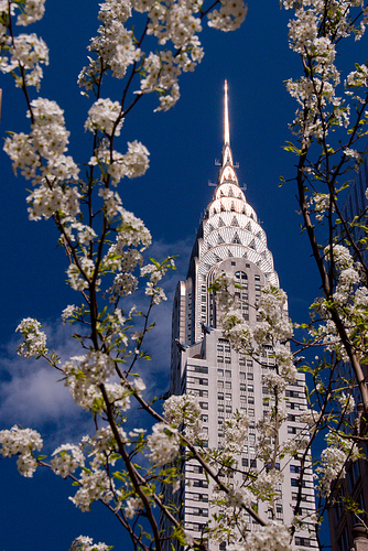 Cherry Blossom Chrysler Building