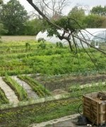 Can Cities Feed Themselves? A Look at Urban Farming in 5 Major American Urban Centers | Seedstock