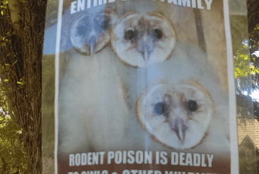 Conservationists, Animal Lovers Urge Locals to Discontinue Rat Poison