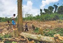 မြန်မာ့သစ်တော