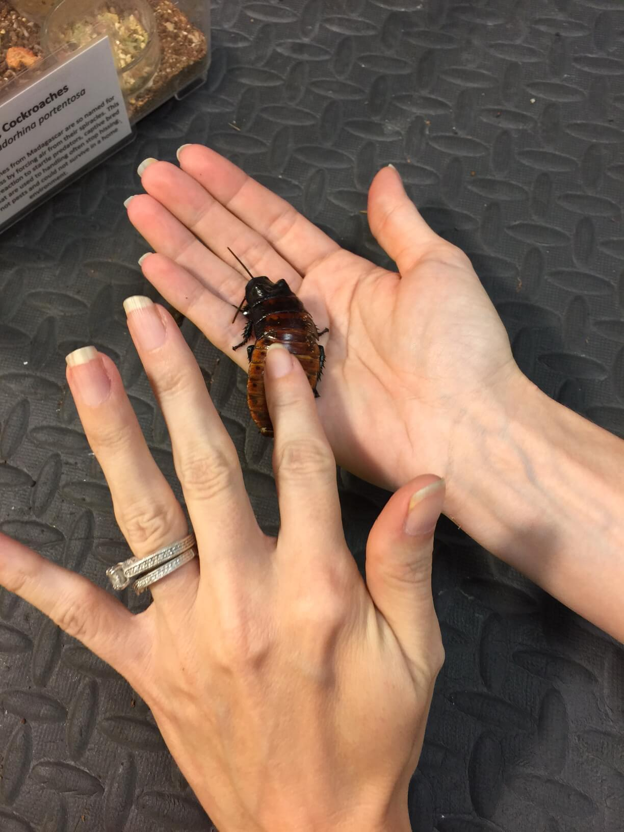 Meh, I've seen roaches 10 times this big in Texas.