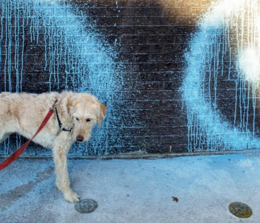 Dog Art - Dr. Dre modelling in front of the abandoned 7/11 at Queen near Jones in Leslieville