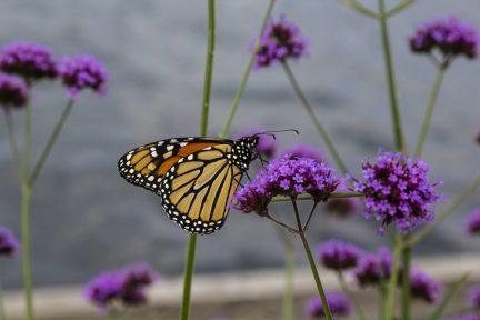 Butterflies are Free - Ashbridges House
