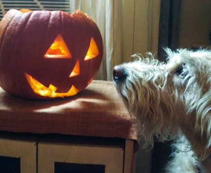 Our first Hallowe'en