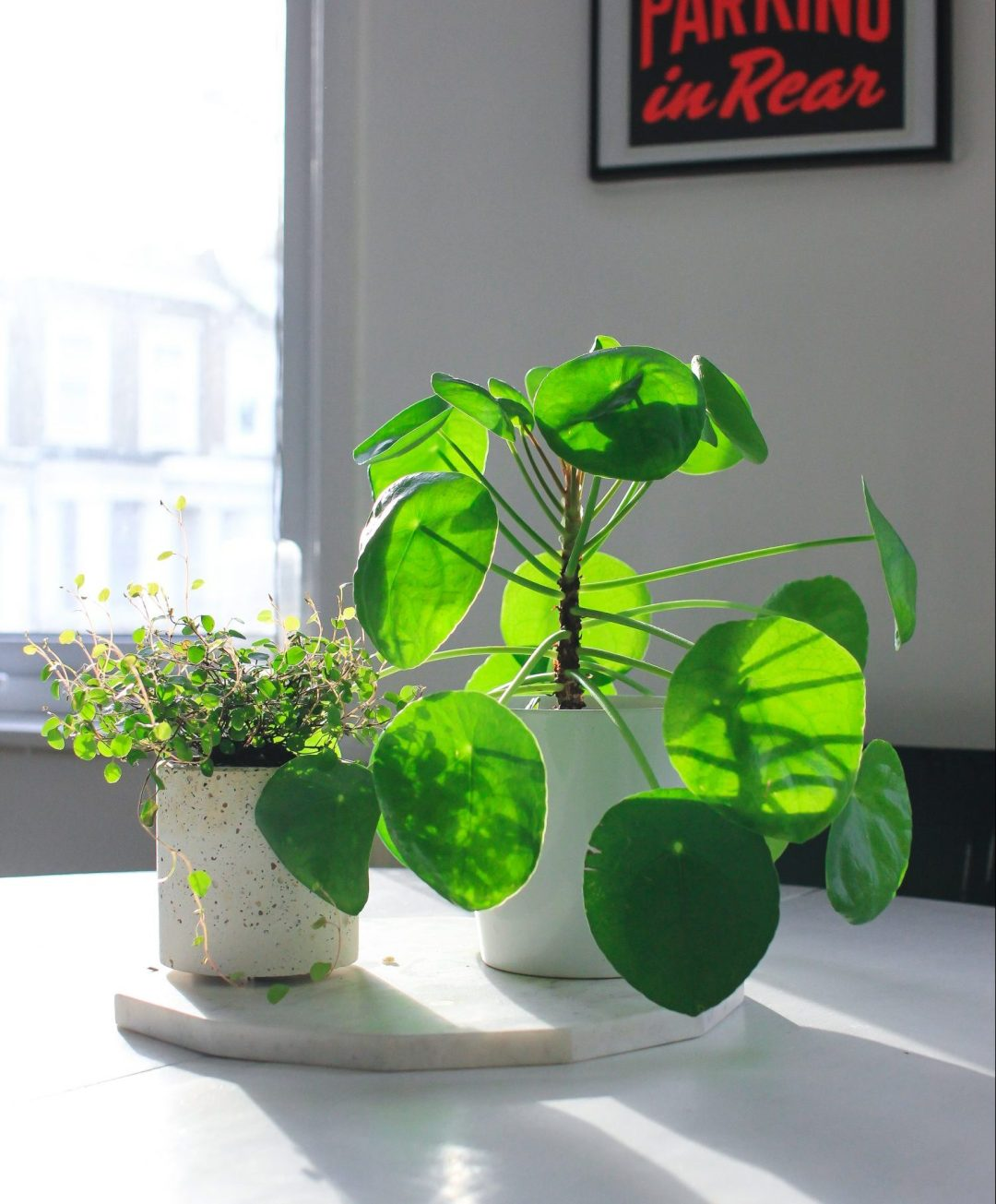 House of Plants - dayofrest.co.uk
