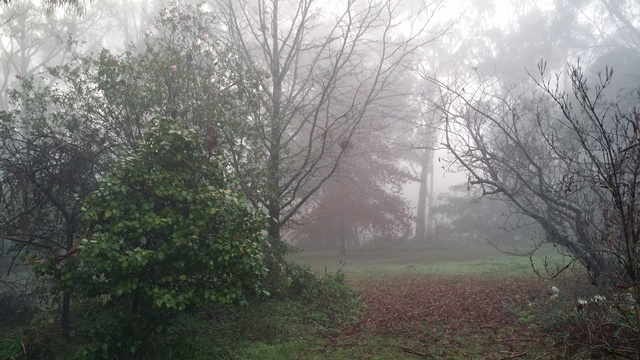 foggy Ballarat