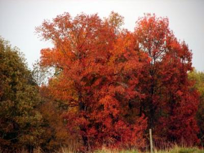 Tennessee Autumn #2