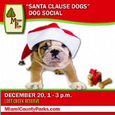 Dog Social Santa Clause Dogs