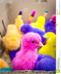 Colored Easter Chicks