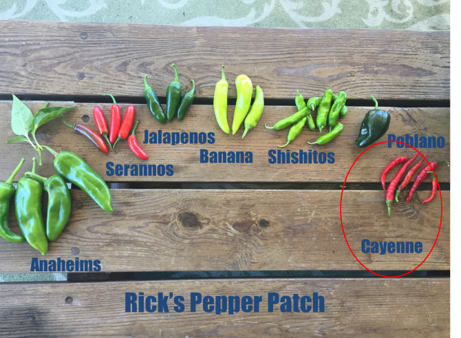 Cayennes are the wicked witch of the peppers