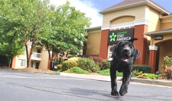 Pet Friendly Hotel Travel with Extended Stay America