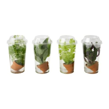 vodena biljka, Ikea, 15 kn