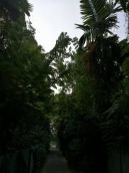Kochi-biennale (6)