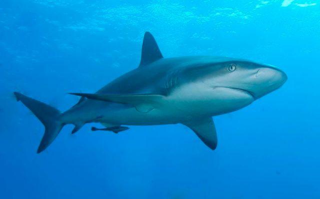 Shark kills Surfer in Rare U.S. Attack