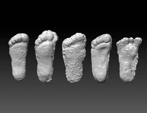 Courtesy of Jeffrey Meldrum 3-D scans of a selection from the more than 200 footprint casts collected in the lab of Jeffrey Meldrum, rendered by the Idaho Virtualization Lab (Idaho Museum of Natural History). The size averages between 16 and 17 inches in length.