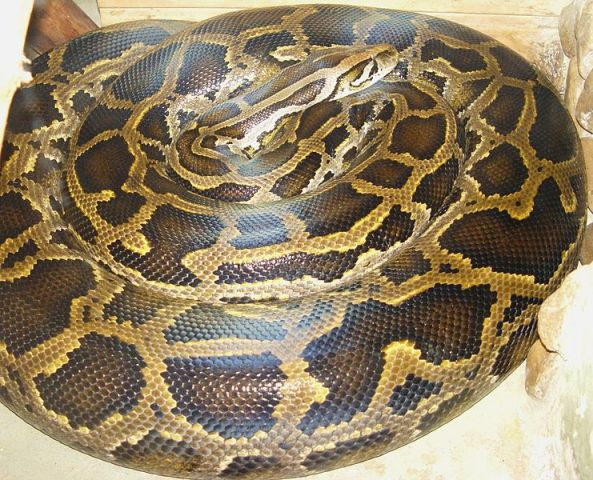 Mom Rescues Baby From Python: Family Finds 6-Foot Snake In Bed