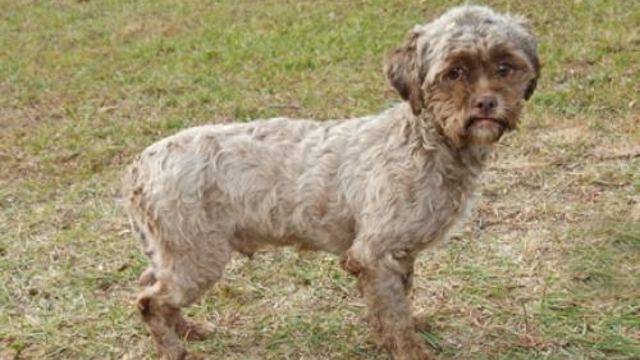 Dog With Human Face Up For Adoption (PHOTO)
