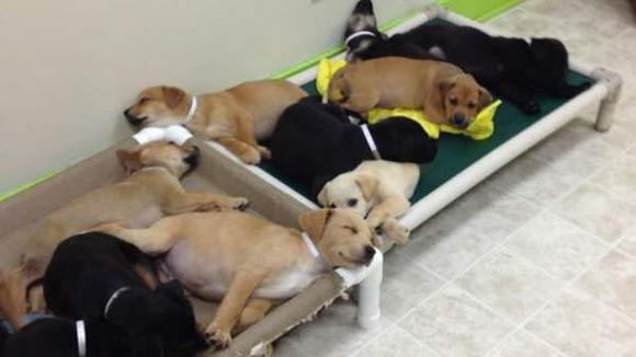 17 puppies dumped: Information On How To Adopt One