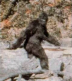 Frame 352 from the Patterson-Gimlin film, alleged by Roger Patterson and Robert Gimlin to show a Bigfoot, and by some others to show a man in an ape suit.